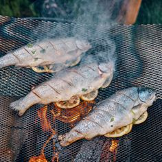 6 Fundamental tips for a lekker fish braai - which you're probably not having often enough - Internationally Inspired Braai Recipes, Fish Recipes, Vegan Recipes, Cooking Recipes, West African Food, South African Recipes, Helpful Hints, Handy Tips, Household