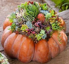 Top a pumpkin with sphagnum moss and an assortment of succulents for a striking, long-lasting display.