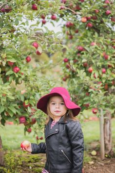 Apple picking – I know, it's the total cliché thing to do this time of year, but it was so much fun! This was actually our first time going apple picking and luckily we live in the Green Belt, so t…