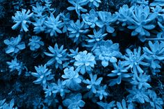 Blue Makes Me Happy