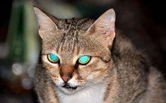 Dlaczego oczy kota świecą w ciemności?