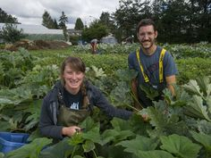 This is our CSA Farm! Zaklan Heritage farm in Surrey, BC Tuesday, September 6, 2016. Pictured is Doug Zaklan and Gemma McNeill, who farm the rural property in the middle of urban sprawl.