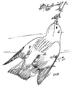 Snow Bunting Coloring Page From Category Select 24342 Printable Crafts Of Cartoons