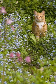 Ginger chub from the garden