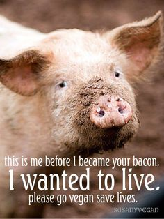 please go #vegan and save lives; image courtesy ~ SusanYaghouti .