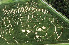 Holiday World's 2013 corn maze