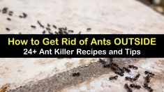 Learn how to get rid of ants outside before they have a chance to invade your home. Our ant killer recipes and ideas are easy to make. Ant Killer Recipe, Homemade Ant Killer, Borax For Ants, Home Remedies For Ants, Sugar Ants, Ant Spray, Diy Pest Control, Bites And Stings, Black Ants