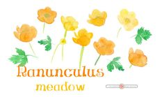 RANUNCULUS watercolor flowers for instant download, watercolor cliparts, florals, set of hand painted flowers, leaves, wedding clipart by ankugraphics on Etsy