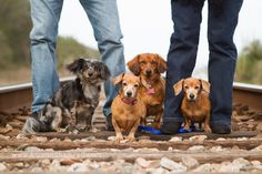 9 Expert Pet Photography Tips- love this on the railroad tracks!