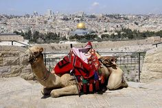 View of Jerusalem from Mount of Olives. Yeah, I rode on one of those camels!  (1988)