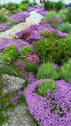 Low growing bedding plants