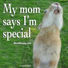 My Pete's extra special!!!! All bunnies are special! www.best4bunny.com
