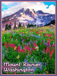 Mount-Rainier-Wildflowers-Washington-United-States-Travel-Advertisement-Poster