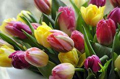 Voorjaar zonder tulpen is als...