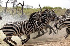 Art in Tanzania added a new photo — with Luis Dominguez Delgado. Kilimanjaro Climb, Wildlife Park, Tanzania, Safari, Campaign, Community, Tours, Content, Medium