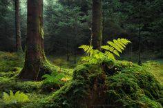 """Green Wonderworld"" - Bavarian Forest, but not the Nationalpark :-)"