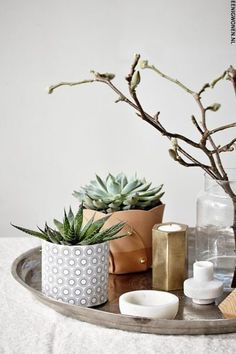Ways To Style Succulents