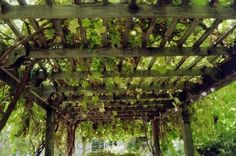 I had a trellis like this at my childhood home on Long Island. It was covered in grapevines just like this one is. My dad made it. I hope that one day I will have a yard and a trellis  like this again. -Tammy
