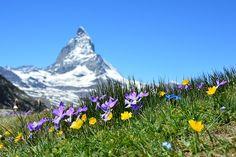 Matterhorn, Alpejski, Zermatt, Góry