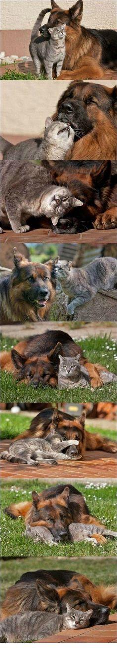 Les meilleurs amis du monde, pour toujours !