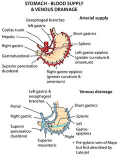 Anatomy of Stomach Blood supply & venous drainage
