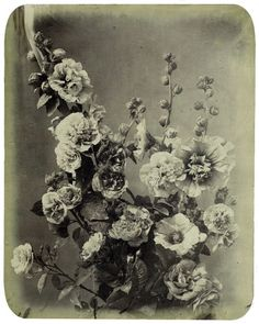 Victorian hollyhocks - Adolphe Braun - c. 1850s Antique Photos, Vintage Photos, Black And White Flowers, History Of Photography, Hollyhock, Vintage Girls, Shades Of Black, Tattoo Inspiration, Still Life