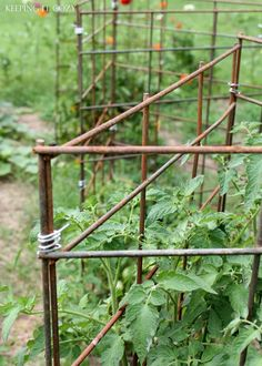 These tomato cages (DIY'd) are triangular, so they can fold flat for storage in winter! via Keeping It Cozy: Gardening