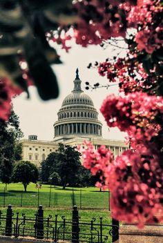 Capitol - Washington D.C.