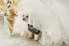 グランピングフォトウェディング&ドッグキャビンステイプランの撮影イメージ Glamping, Dogs, Wedding, Animals, Valentines Day Weddings, Animales, Animaux, Go Glamping, Pet Dogs