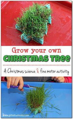 Grow your own Christmas tree sponge with this super fun Christmas science and fine motor activity your kids can do over and over!