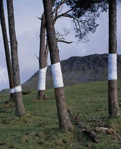 Zander Olsen creates a visual relationship between trees and the line of the horizon