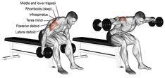 Rear Delt Exercises, Upper Back Exercises, Good Back Workouts, At Home Workouts, Gym Workouts, Bent Over Lateral Raises, Deltoid Workout, Back And Shoulder Workout, Dumbbell Fly