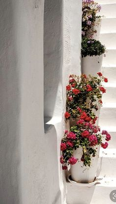 Zorba The Greek, Stuff To Do, Things To Do, Paros Island, Flower Pots, Flowers, Greece Islands, Athens Greece, Naoussa Paros