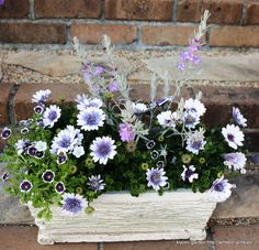 Small Courtyards, Tears Of Joy, Container Flowers, Green Flowers, Container Gardening, Flower Pots, Grass, Floral Wreath, Balcony