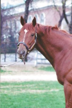 Secretariat ran for a few years and spent the rest of his life making babies Horses And Dogs, Cute Horses, Animals And Pets, Dressage Horses, Thoroughbred Horse, Most Beautiful Animals, Beautiful Horses, The Great Race, Majestic Horse