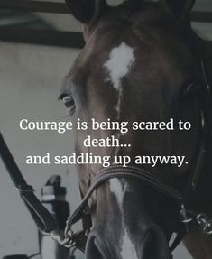Courage Pretty Horses, Horse Love, Beautiful Horses, Equine Quotes, Equestrian Quotes, Equestrian Problems, Equestrian Girls, Inspirational Horse Quotes, Horse Riding Quotes