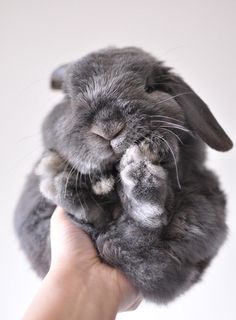 Floppy grey bunny. Sometimes I feel the same way. Need somebody to hold me