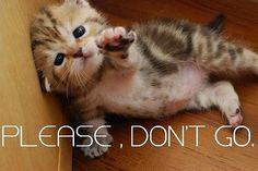 funny cute sad cat kitten