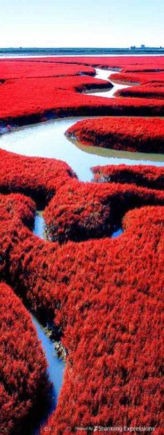 Red Beach in Dawa County, Panjin, Liaoning, China