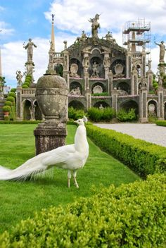White peacock at Isola Bella by Mary Grace Pandolfo on 500px