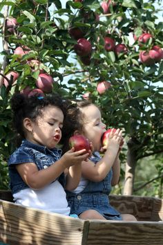Weaver's Orchard (Morgantown, PA) is a community destination for festivals, events and family fun on the farm throughout the year. Precious Children, Beautiful Children, Little People, Little Ones, Cute Kids, Cute Babies, Apple Farm, Apple Orchard, Red Apple