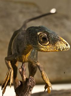 Scipionyx samniticus by former worlds, via Flickr | Click through for a larger image!