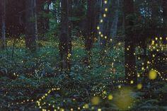 Google Image Result for http://beezneezme.files.wordpress.com/2012/07/fireflies.jpg