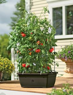 TOMATO SUCCESS KIT The most convenient, foolproof way to grow your own delicious tomatoes  From Gardener's Supply Company