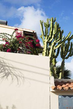 Moraira Spain | holiday sun | cacti | photography