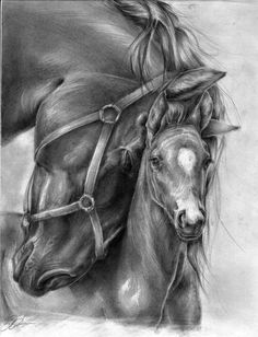 Beautiful Pencil Drawing Of Horses Horse Pencil Drawing, Pencil Drawings Of Animals, Horse Drawings, Art Drawings, Pencil Art, Realistic Drawings Of Animals, Draw Animals, Baby Animals, Arte Equina