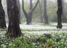 grafika tree, nature, and flowers Beautiful World, Beautiful Places, Pokemon, Parcs, Faeries, Mother Nature, Wild Flowers, Forest Flowers, Countryside