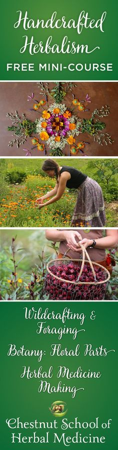 We're fizzing with excitement over the debut of our very first free online herbal mini-course! Come join us for a gander into the world of handcrafted herbalism, where we'll explore wild foods foraging, herbal medicine making, and a bit of juicy herbal botany to boot. Click Here To Enroll by March 22: http://chestnutherbs.com/handcrafted-herbalism/