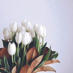 Because glimpses of spring are good for the soul.  #tulips #beauty #neutrals #spring #latergram #photography