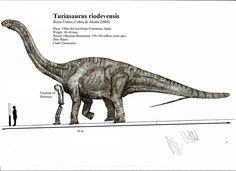 Turiasaurus riodevensis by ~Teratophoneus Dinosaur Drawing, Jurassic Park World, Prehistoric Creatures, Star Vs The Forces Of Evil, T Rex, Natural History, Fossils, Mammals, Nature Photography